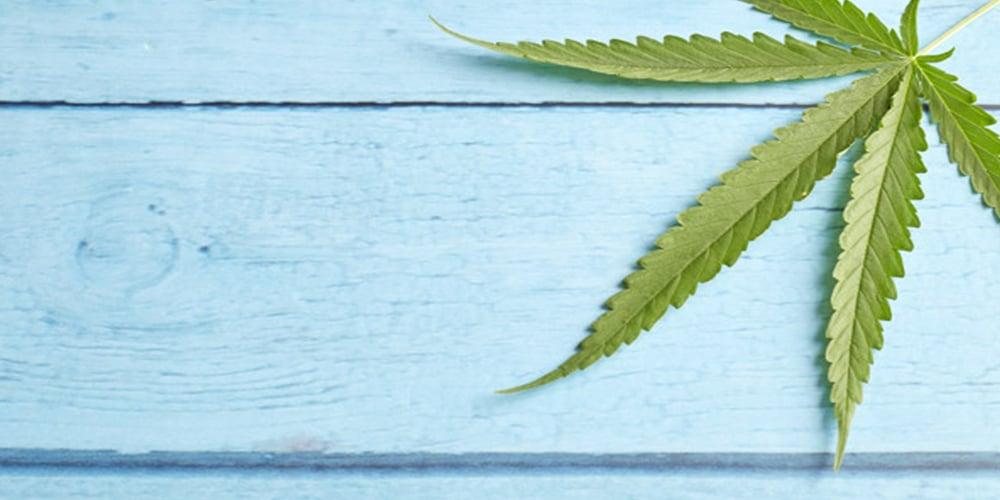 fleur de cannabis pourcentage