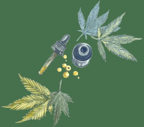 fleur et huile de cbd