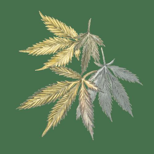 résine cbd cannabis