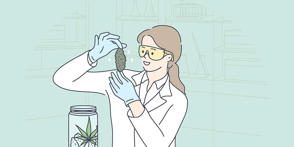 etude cannabis efficace covid