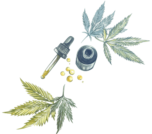 consommer complement cannabis cbd