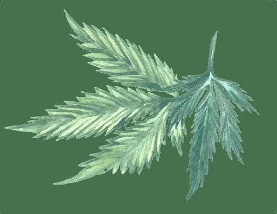 légalisation thc cbd