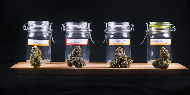 Kush cannabis définition et effets