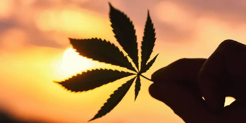 séchage cannabis