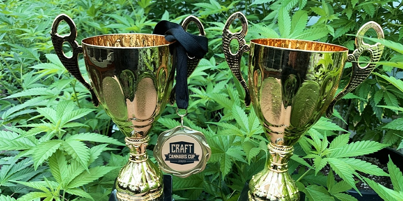 Histoire origine cannabis Cup